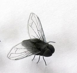 Handmade flies